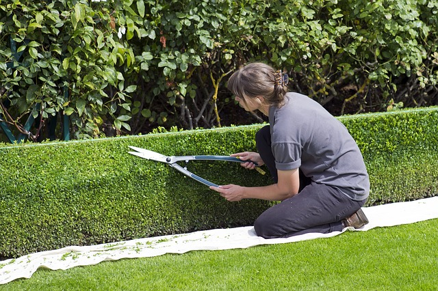 úprava záhrady živé ploty