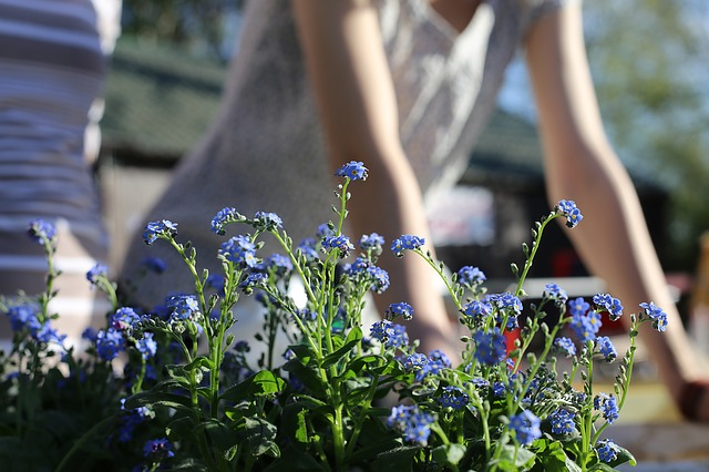 úprava záhrady