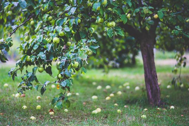 záhradné ovocné stromy