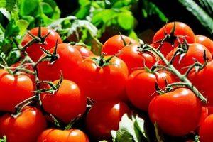 ako urobit paradajkovy pretlak